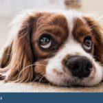 Leyes sobre perros en comunidades de vecinos