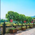 Sentencia favorable demanda sobre impugnación por instalación de terraza en la vía pública